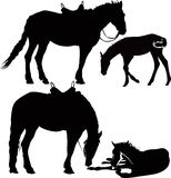 Животные лошадей Стоковая Фотография RF
