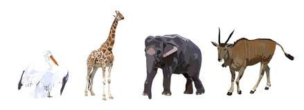 животные одичалые Стоковая Фотография