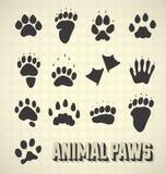 Животные печати лапки Стоковые Фото
