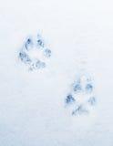 Животные печати Стоковая Фотография RF