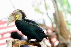 Животные попугая суда говоря 2 Стоковые Фото