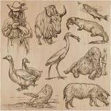Животные по всему миру - нарисованный рукой пакет вектора Линия искусство иллюстрация вектора