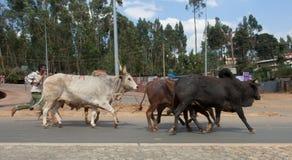 Животные рынка в Эфиопии Стоковое Фото