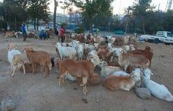 Животные рынка в Эфиопии Стоковые Изображения RF