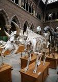 животные скелеты стоковое изображение rf