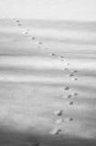 животные следы ноги Стоковое фото RF