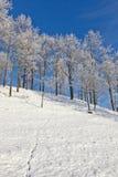 животные следы снежка стоковые изображения rf