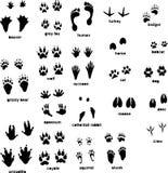 животные следы иллюстрация штока