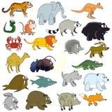 животные смешные Стоковое фото RF