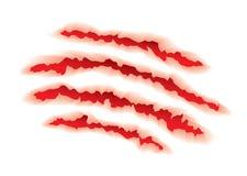 животные сорванные когти Стоковые Изображения