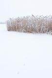 животные следы снежка Стоковое фото RF