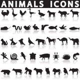 Животные установленные иконы Стоковое Изображение