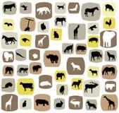 животные Стоковая Фотография