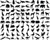 животные d3 Стоковая Фотография