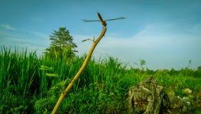 Животные Dragonfly красивые стоковые изображения rf