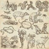 Животные - Freehand делающ эскиз к, пакет иллюстрация вектора
