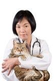 животный азиатский доктор Стоковая Фотография RF
