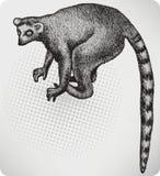 Животный лемур, рук-чертеж. Иллюстрация вектора. Стоковая Фотография RF