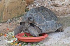 Животный которое имеет carapace стоковая фотография rf