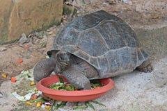 Животный которое имеет carapace стоковое фото rf