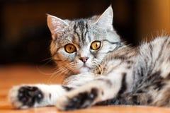 животный кот Стоковые Фотографии RF