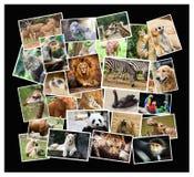 Животный коллаж Стоковое Изображение