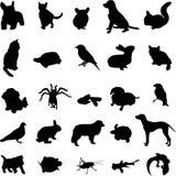 животный любимчик иллюстрация штока