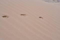 Животный путь следов ноги стоковое изображение rf