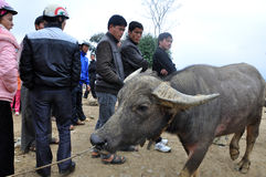 Животный рынок в Bac Ha, Вьетнаме Стоковое Фото