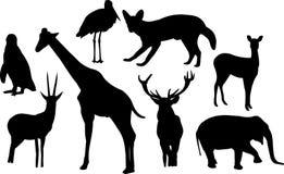 животный силуэт Стоковая Фотография RF