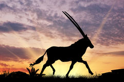 Животный силуэт антилопы Стоковые Изображения