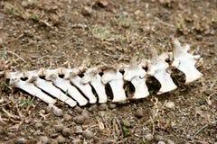 Животный скелет стоковые фото