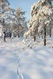 Животный след в снежке Стоковое Изображение RF