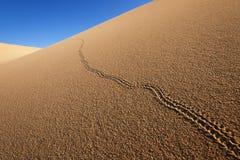Животный след на песчанных дюнах Стоковые Фото