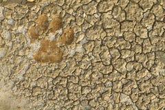 животный след ноги Стоковые Изображения RF