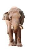 животный слон Стоковое фото RF