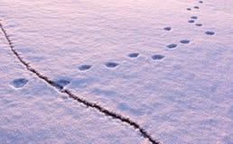 Животный след водит над отказом на замороженном озере Стоковая Фотография