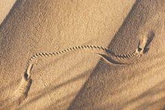 Животный след в песке пустыни. Стоковое Изображение