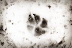 Животный след в снеге Стоковая Фотография
