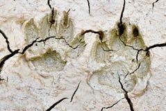 Животный след ноги Стоковые Фотографии RF