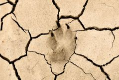 Животный след ноги Стоковая Фотография