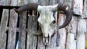 Животный череп на загородке стоковое изображение rf