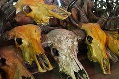 Животный череп Стоковое Изображение