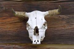 животный череп Стоковое Фото