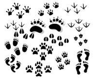 Животный foots Стоковые Изображения RF
