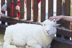 Животный Petting Стоковые Фотографии RF