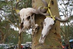 3 животных черепа прикрепленного к дереву Стоковое Изображение