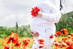 Живот беременной девушки на поле мака Стоковое фото RF