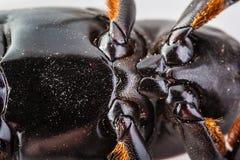 Живот насекомого Стоковые Фото