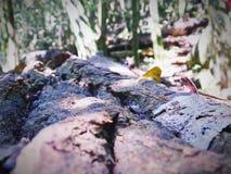 живущая природа стоковая фотография rf